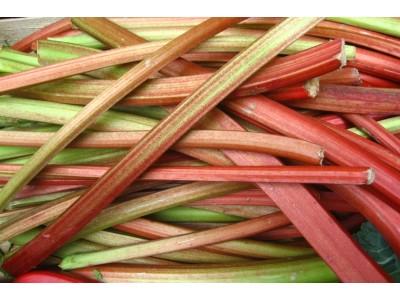 Rhubarbes Terroir