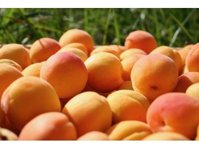 Abricots Terroir